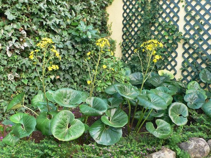 plantas de sombra Plantas Pinterest