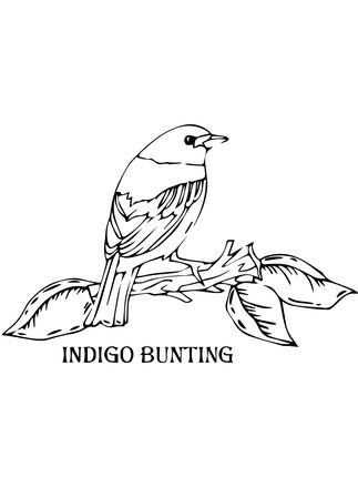 Click To See Printable Version Of Indigo Bunting Coloring Page