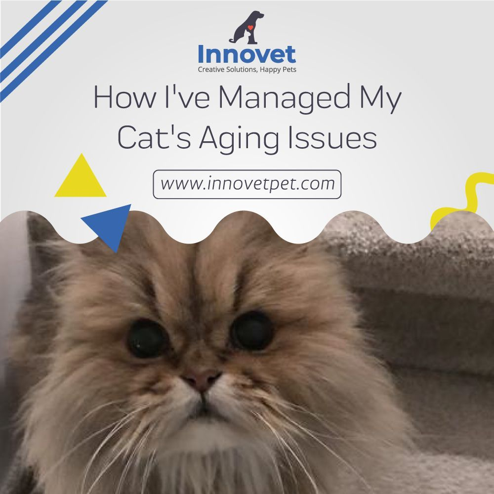 How I've Managed My Cat's Aging Issues Cats, Walking