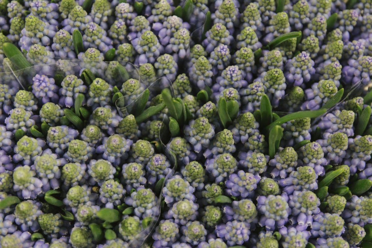 New Covent Garden Flower Market February 2019 In Season Report