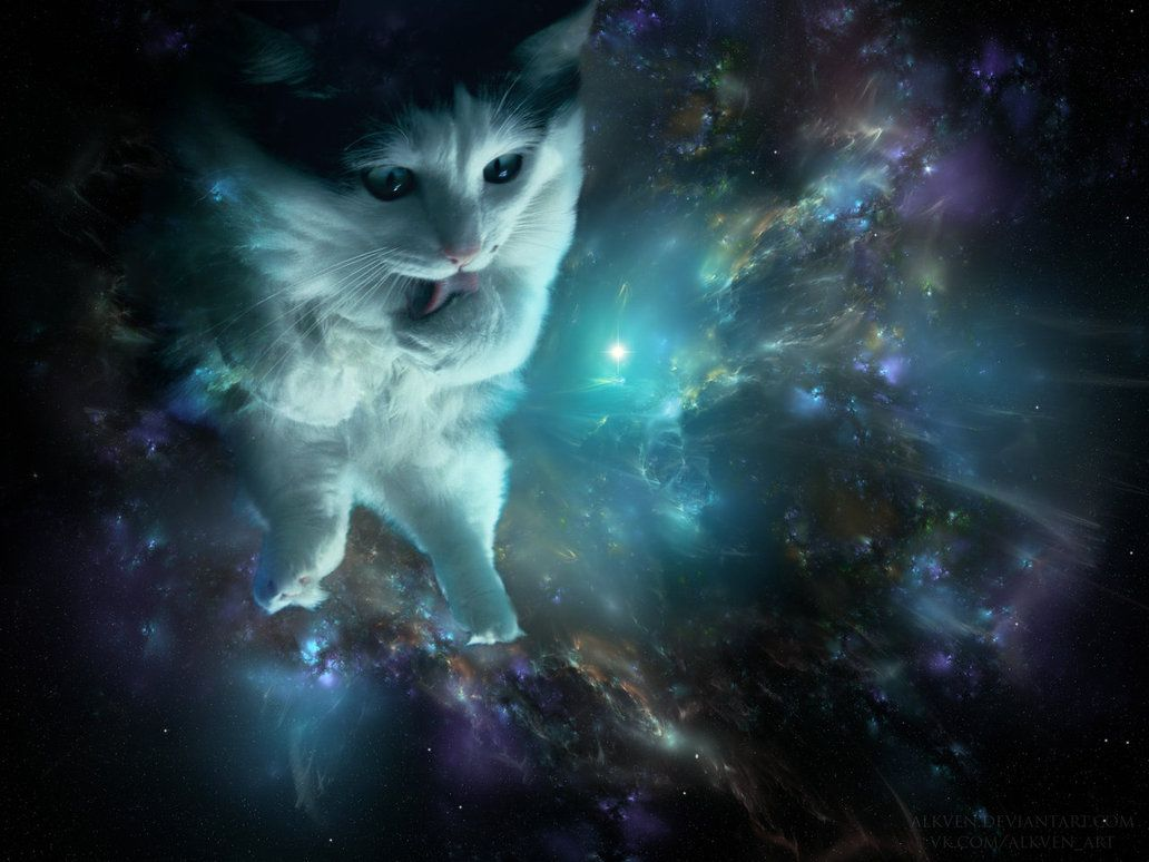 Space Cat Wallpapers Desktop Background Space Cat Crazy Cats