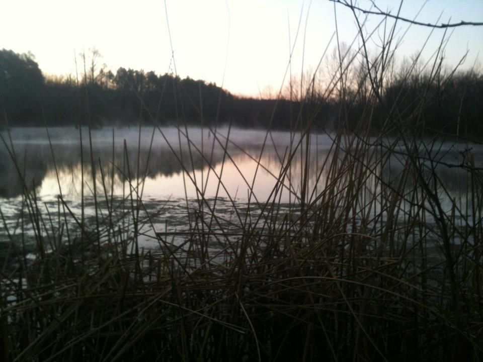 Wilkins Spring Lake, Mill Creek Spring lake, Outdoor, Lake
