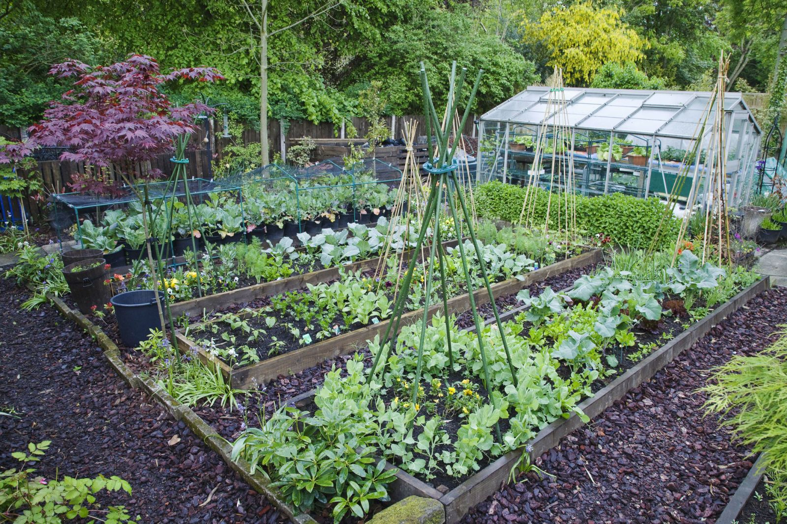 Companion planting: How to protect your vegetable patch or ...
