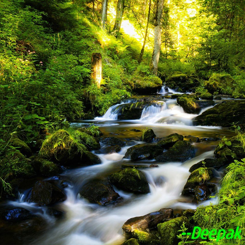 Pin by Linda Werner on waterfalls Forest waterfall