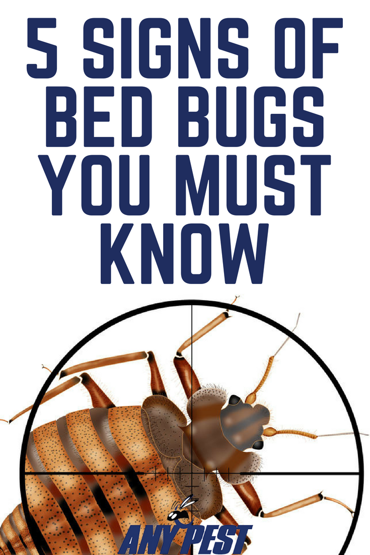 Bed Bugs What Are They and How to Get Rid of Them Signs