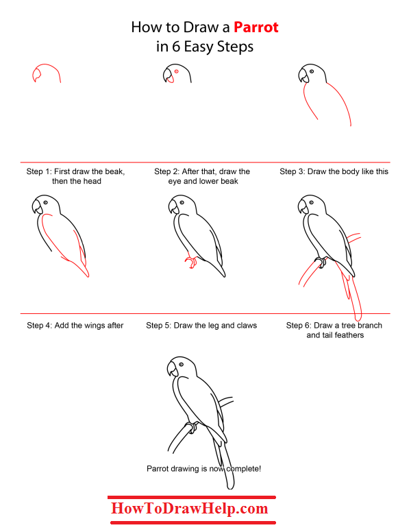 Image result for how to draw a parrot