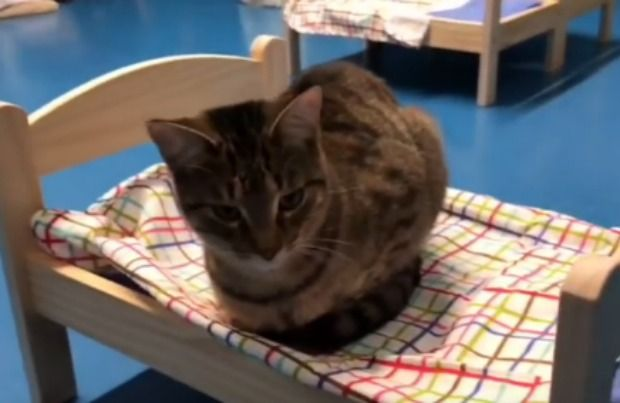 Shelter Cats Sleeping in Donated Doll Beds Is the Best Thing Ever