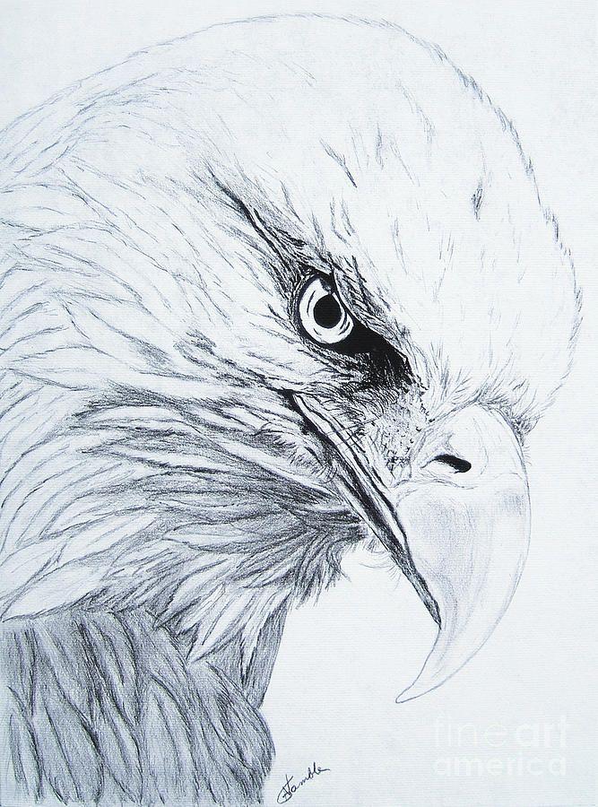 Eagle Drawings - Bing Images | tekenen2 in 2018 | Pinterest ...