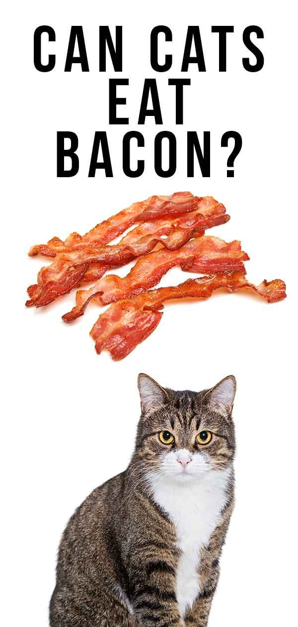 Can Cats Eat Bacon? How To Share This Treat With Your Cat