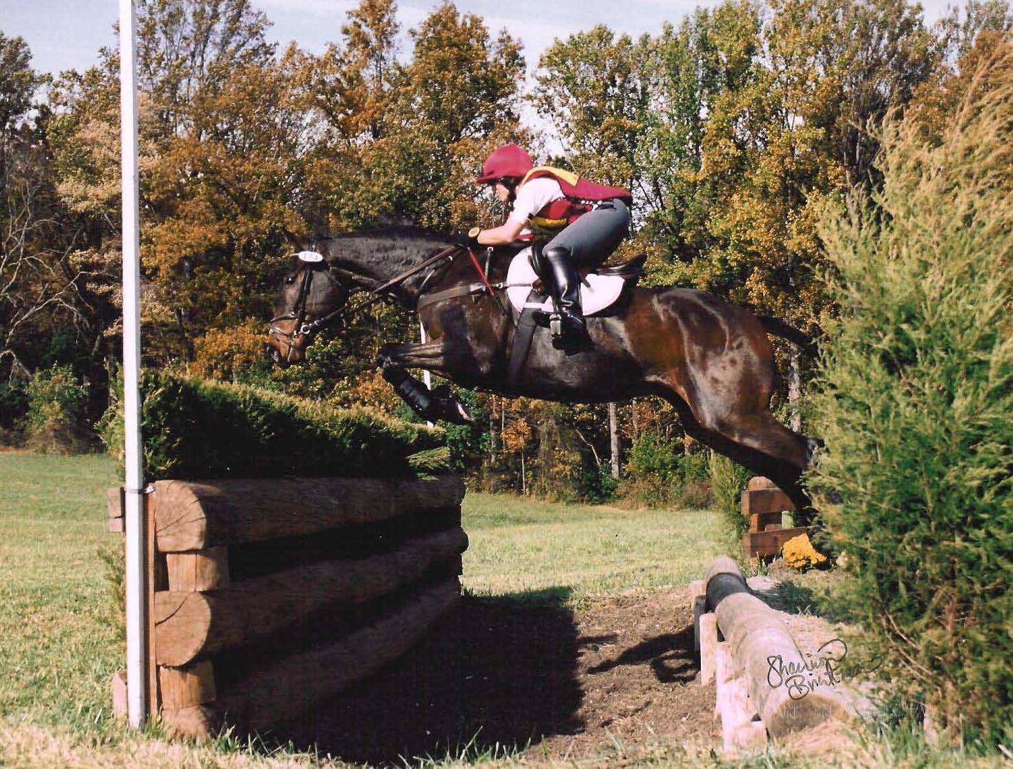 Pin On Equine Resources