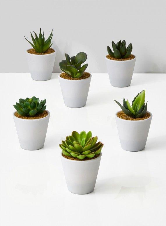 4in White Pot With Succulent, Set of 6 | Fake succulent plants, Plant wall  decor, Artificial plants decor