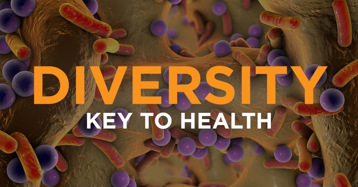 Healthy gut bacteria diversity is the key healthy gut
