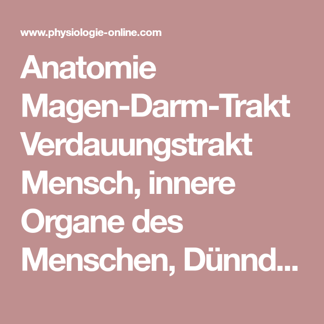 Anatomie Magen-Darm-Trakt Verdauungstrakt Mensch, innere Organe des ...