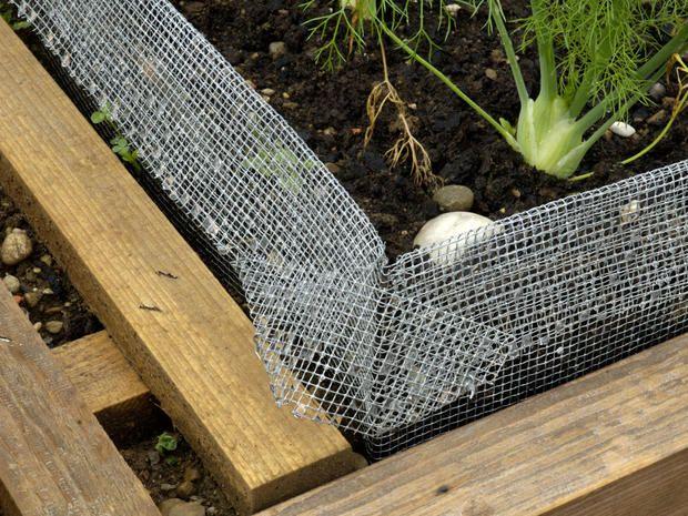 Umweltfreundliche Tipps Gegen Schnecken Im Garten Schnecken Im Garten Schneckenzaun Schnecken