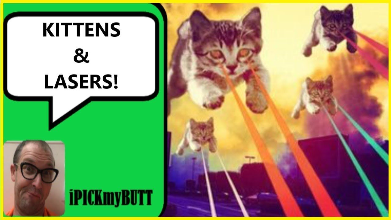 Kittens And Lasers Animals Having Fun Kittens Animals Fun