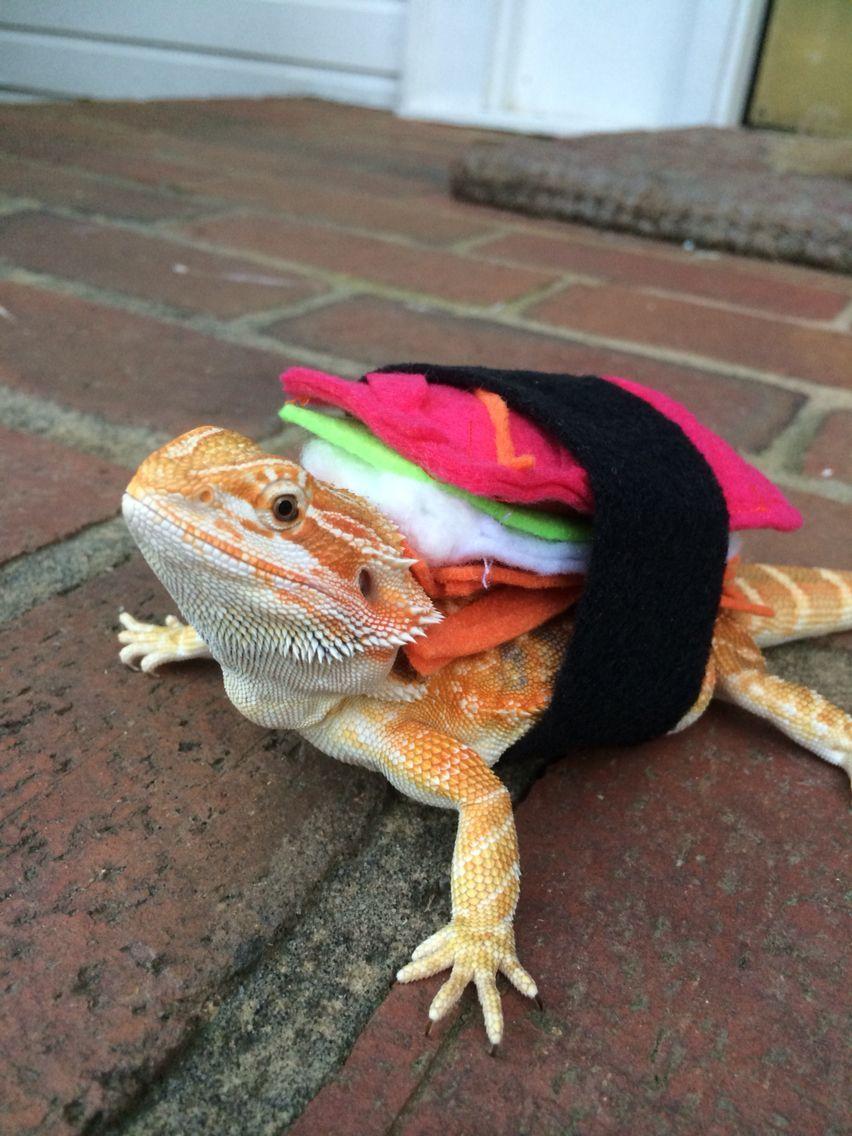 My lizardu0027s DIY sushi roll costume I made her for Halloween & My lizardu0027s DIY sushi roll costume I made her for Halloween ...