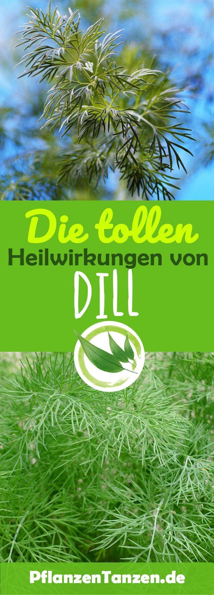 【ᐅ】Dill Pflanzen säen, pflegen & ernten 2020 | Steckbrief