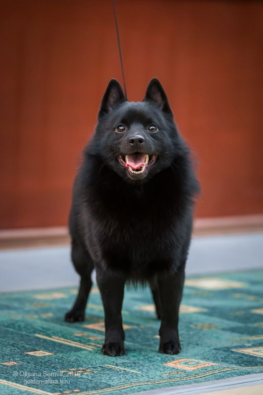 Cool Cuby Chubby Adorable Dog - 1dcee4b48a2287b93e11dd42367bffeb  2018_74276  .jpg