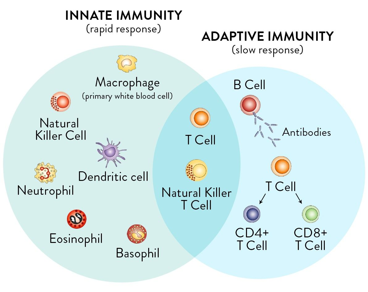 best ideas about microbiology med student nurse innate and adaptive immune system