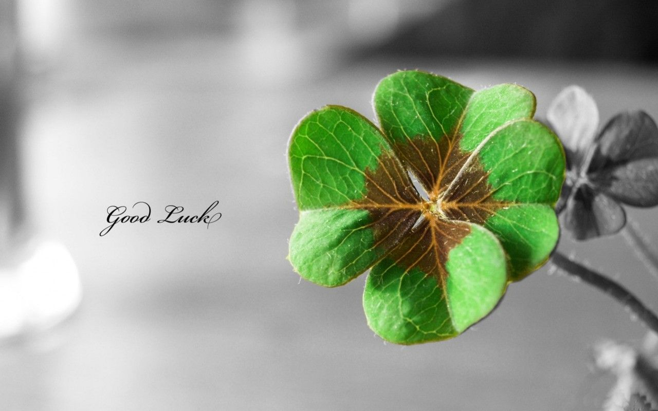 Trébol De La Buena Suerte Wallpapers Good Luck Clover Clover Leaf Flower Words