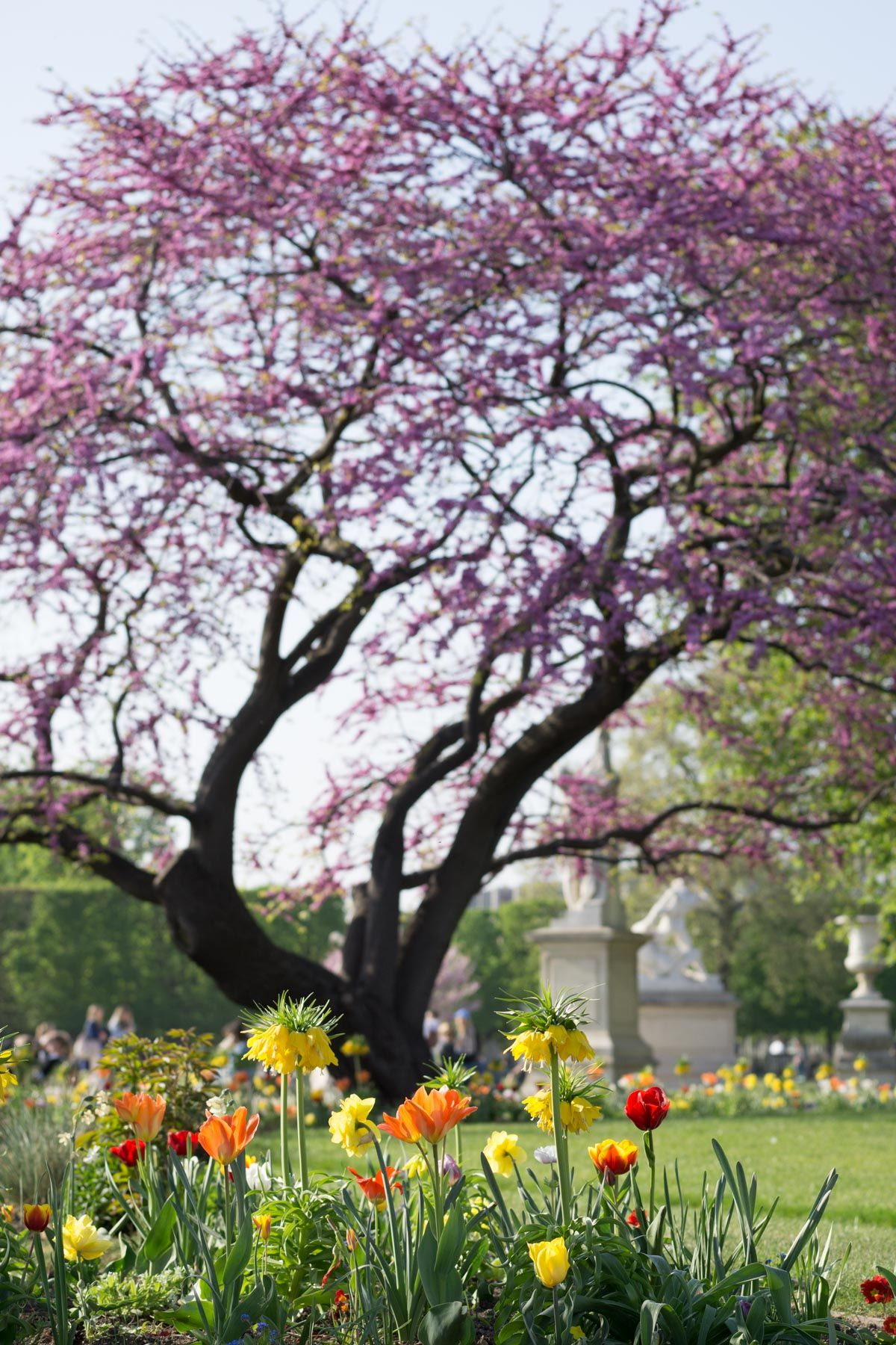 Paree In Bloom Your Guide To Paris Spring Flowers Flower Plant