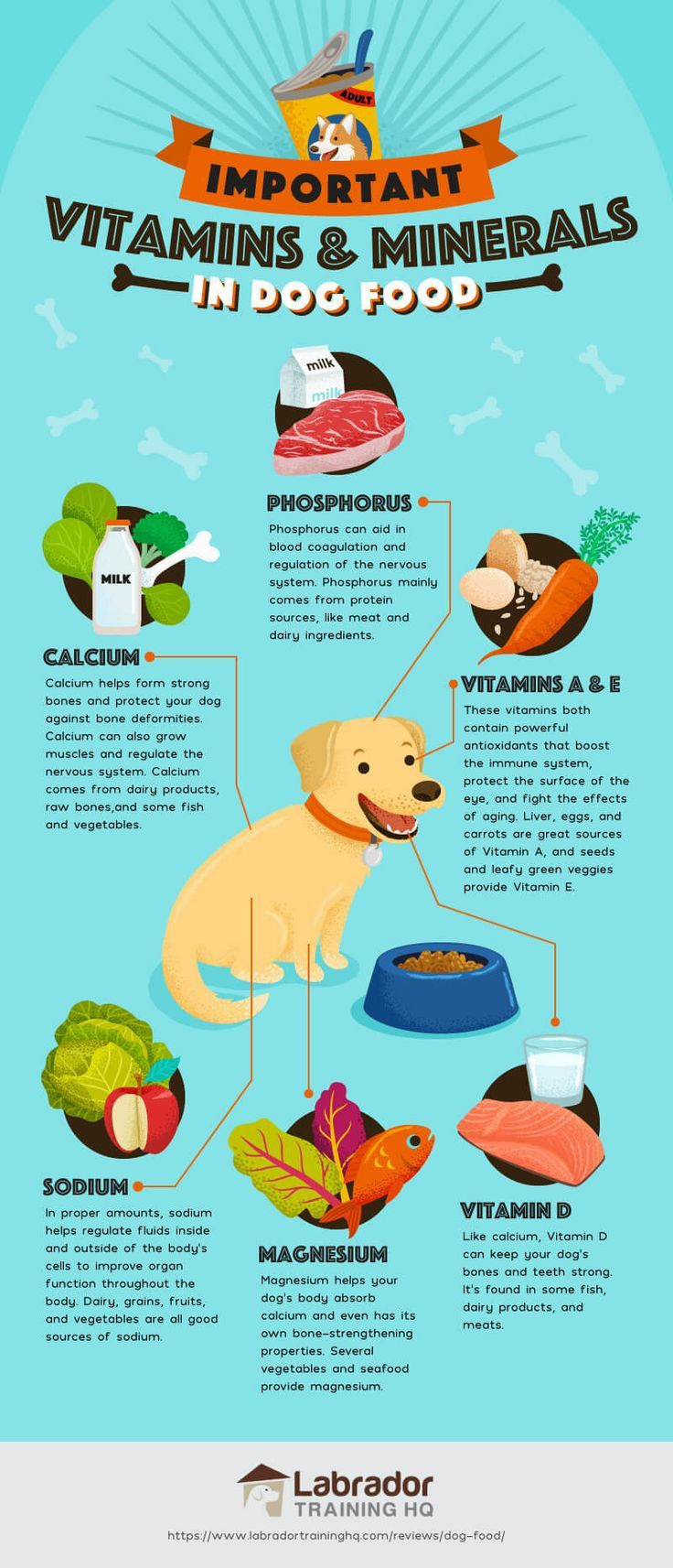 Best Dog Foods Our Complete Guide For 2020 Dog food