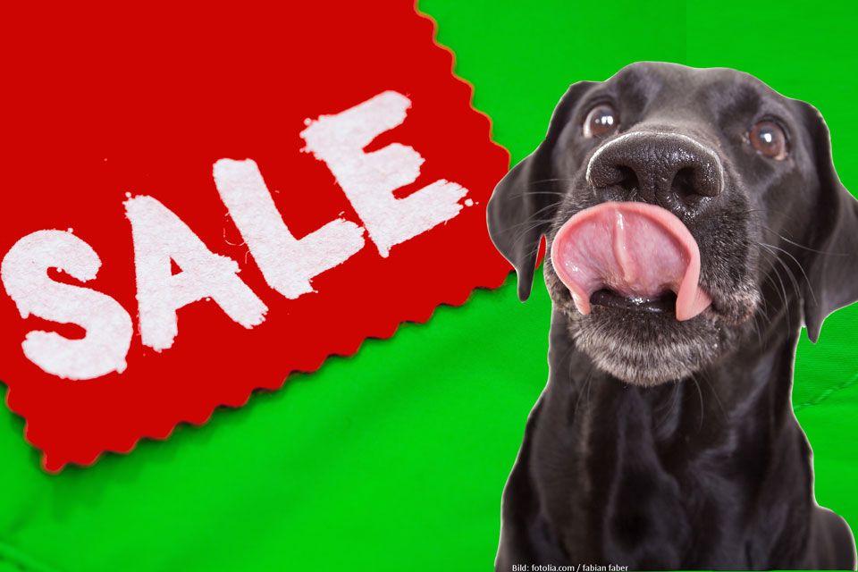 Jetzt Sparen Unsere Sonderangebote Jetzt Beim Hundefutter Kauf Sparen Unsere Sonderangebote Fur Hundefrischfutter Fertigbar Hunde Futter Hunde Hundefutter