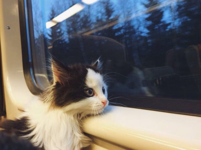 Image result for cat on train