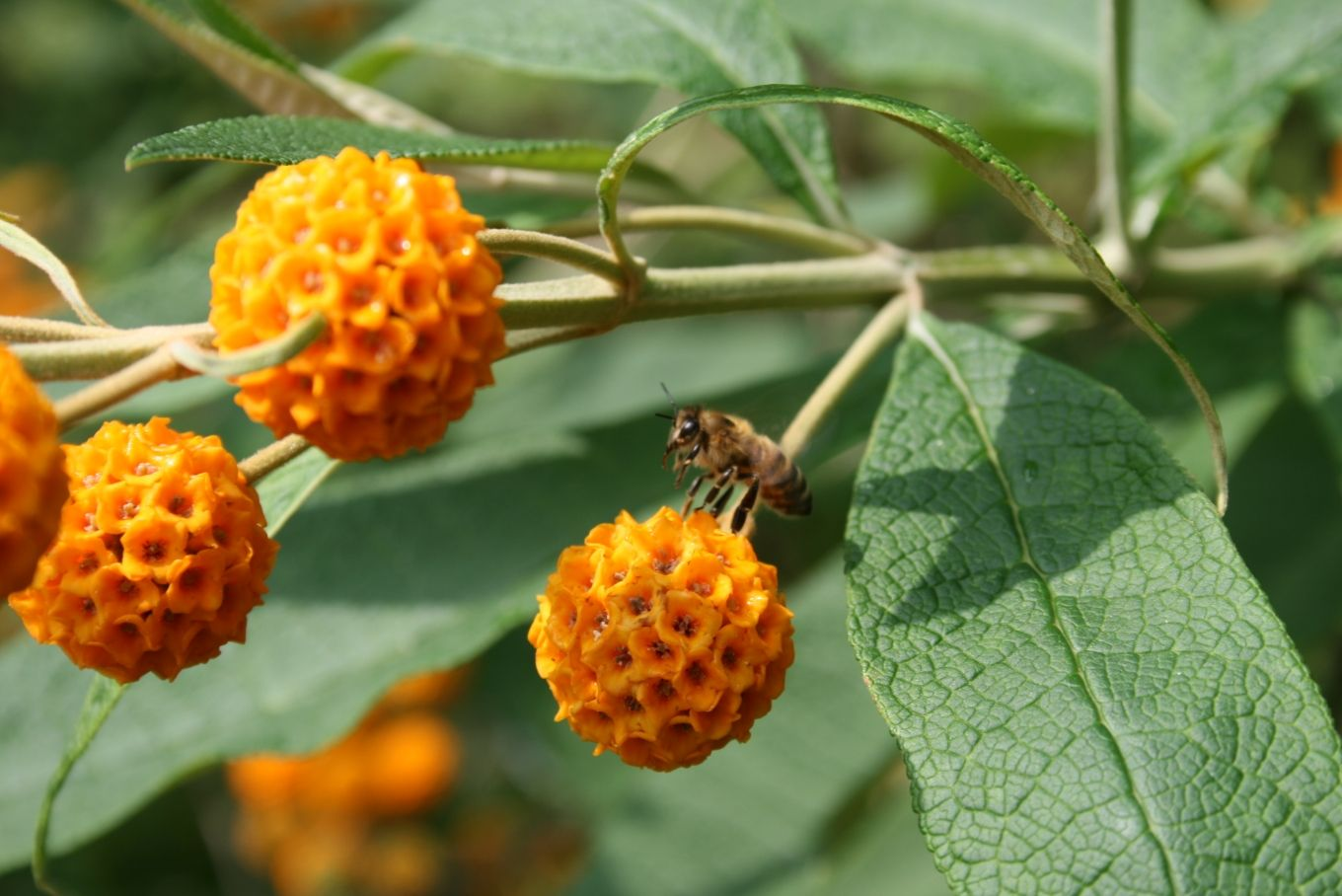 Plants for attracting Bees and Butterflies | Butterfly ...