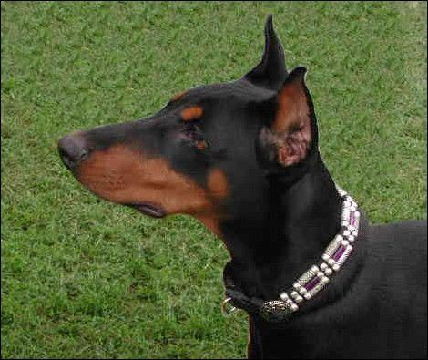 Have You Seen These Famous Dobermans Doberman Pinscher Dog