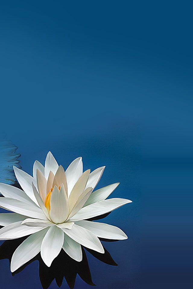Lotus Flower Parallax Hd Iphone Ipad Wallpaper きれいな花 創意