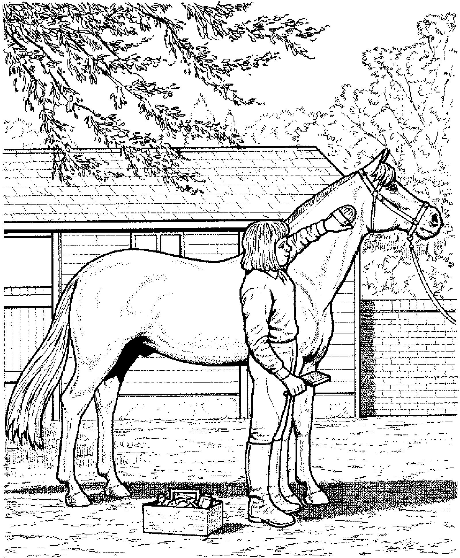 Ausmalbilder Cowboy Pferd : Http Www Malvorlagen Net Ausmalbilder Pferde B C3 Bcrsten Jpg