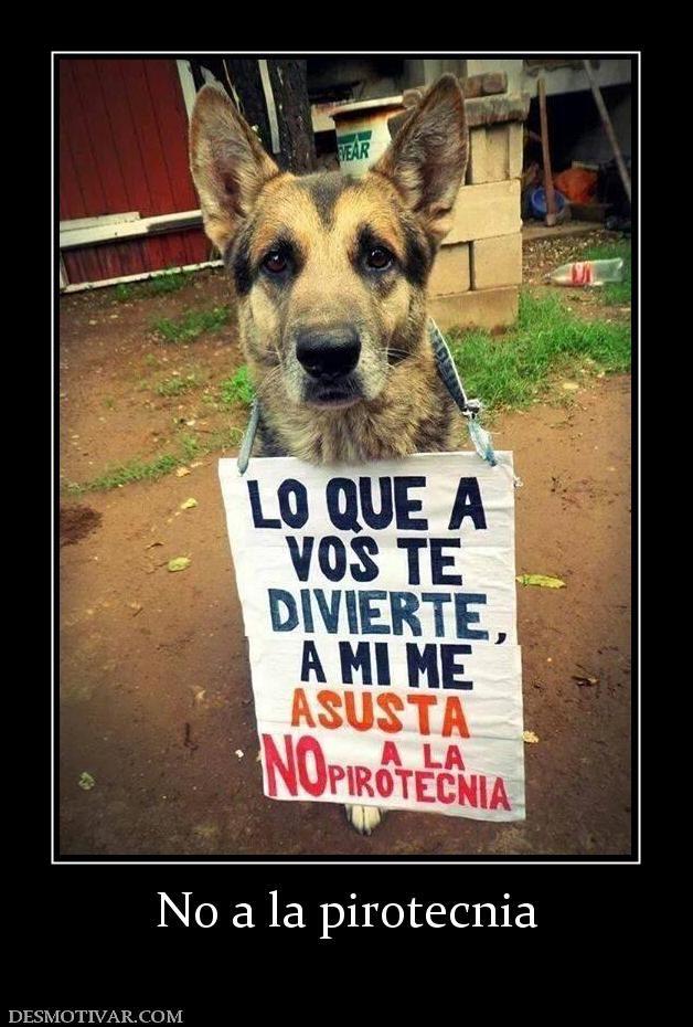 Desmotivaciones No A La Pirotecnia Doggie Style Funny Pictures Pets