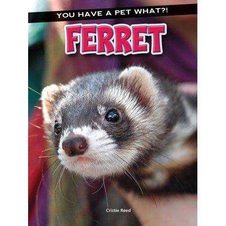 Feature Ferret, Cute ferrets, Pet ferret
