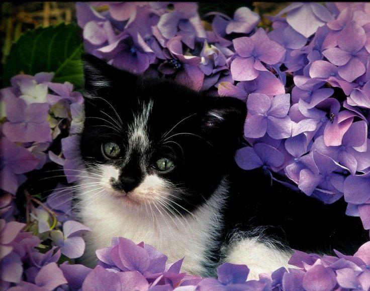 Kitten Flower Garden Feline Cute Full Hd 1080p Background Take A