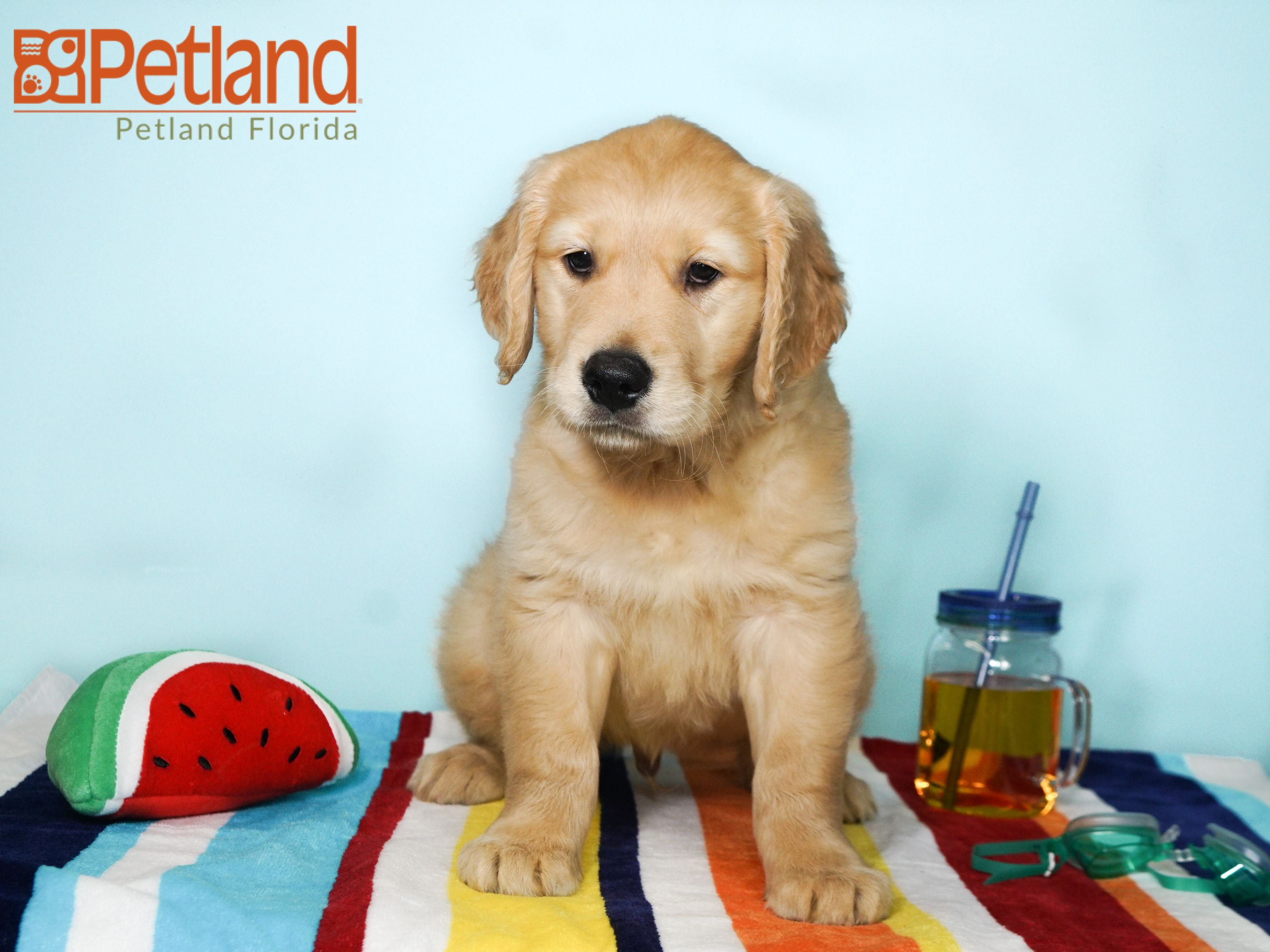Puppies For Sale Puppies Puppies For Sale Puppy Love