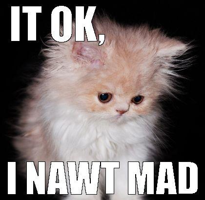 1dd2b7dd472e4dd5846559344feea757 fluffy white cat not mad, phew! cats, cats, cats pinterest