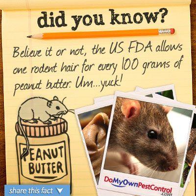 Pin On Fun Facts