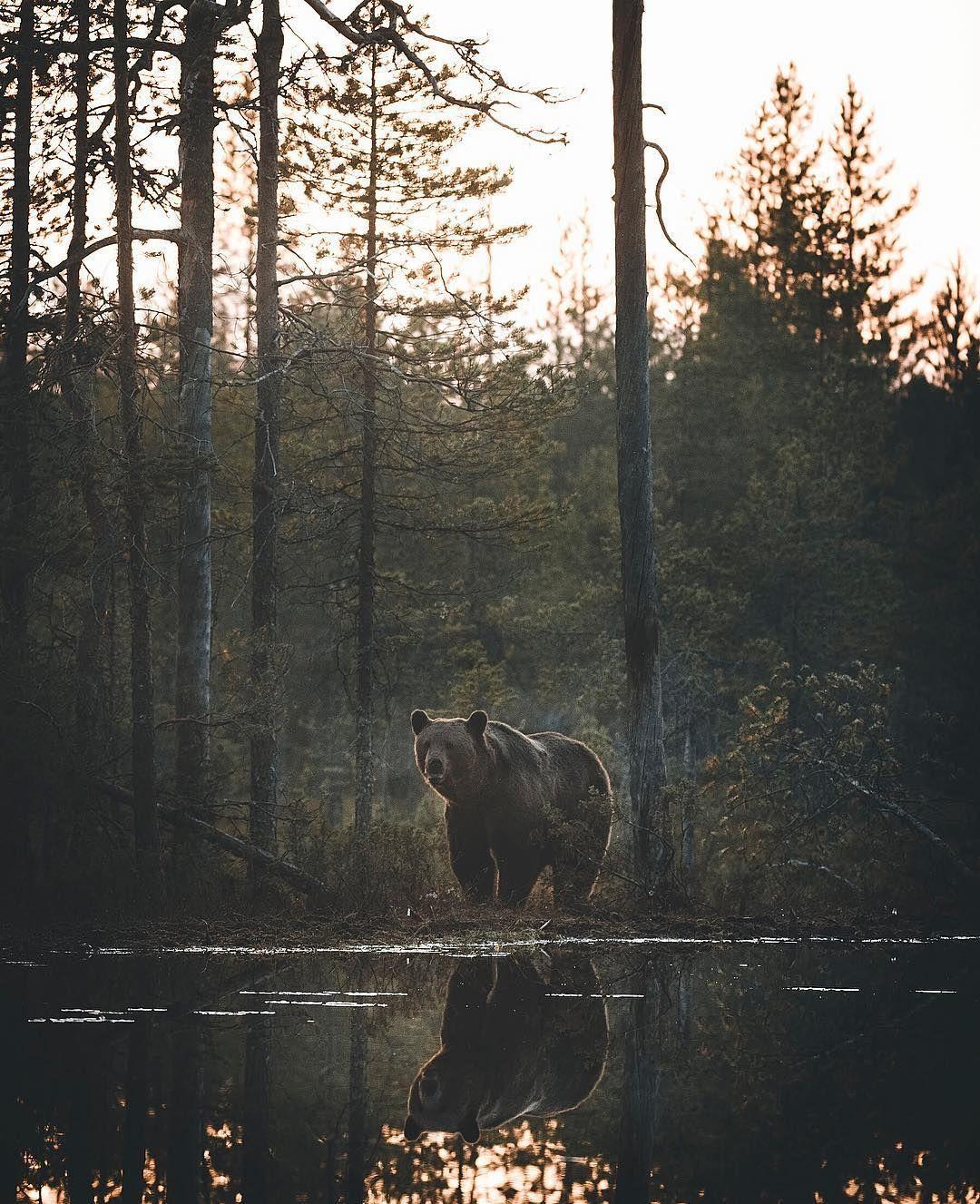 Magical moment from the deep Finnish Wilderness ✨ . . . . . #moodygrams #artofvisuals #wildernessculture #beautifuldestinations #artofvisuals #exploretocreate #earthofficial #finland #conservation #wildlife