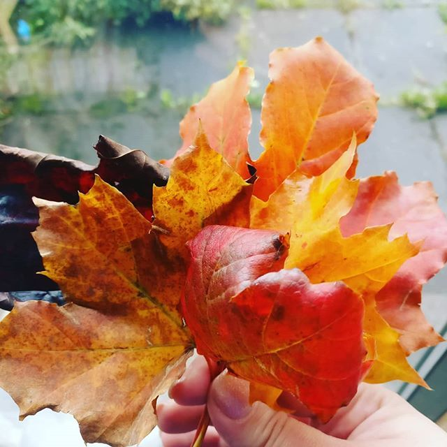A bunch of fallen leaves also makes a pretty wee bouquet  I love this season so much   #fallenleaves #autumn #autumnvibes #happyfeelings #scotland #happyfriday
