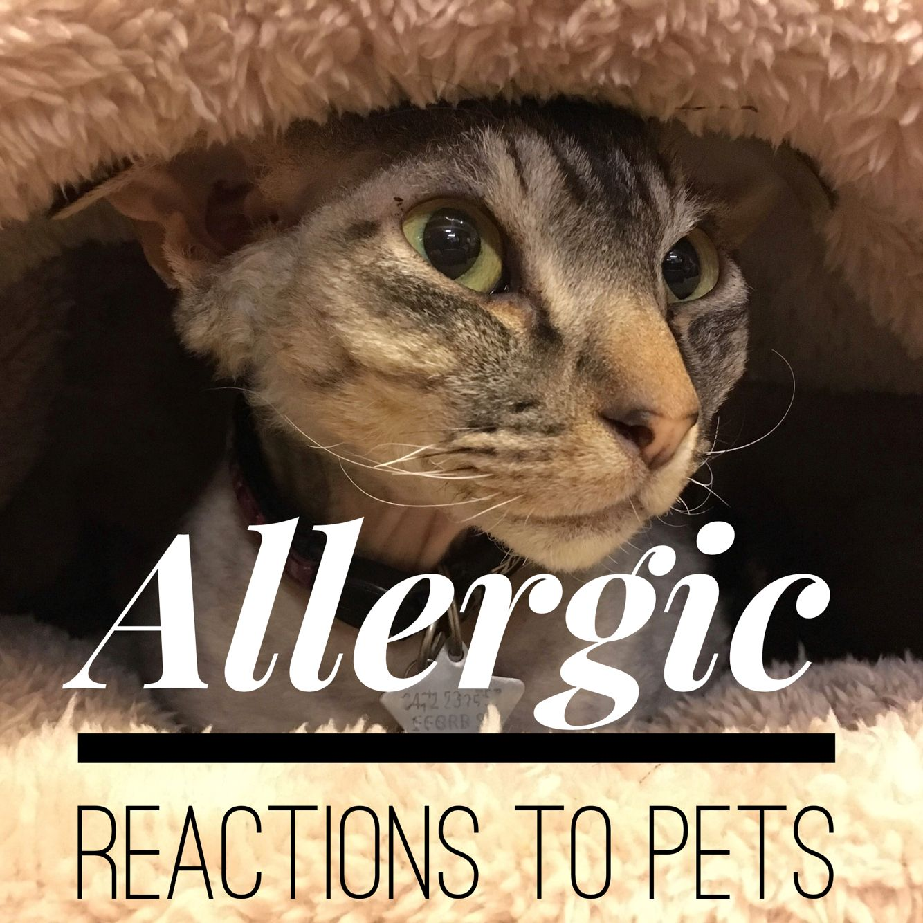 What to do for someone with an allergy to dogs or cats