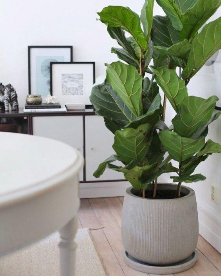 Piante da Appartamento - Le Mie 7 Preferite ⋆ Debora nel ...