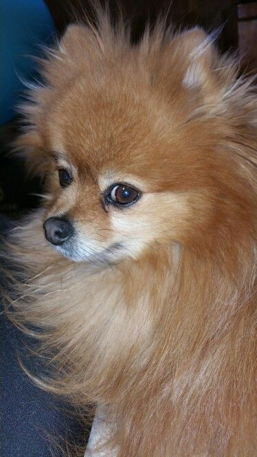 Don T Let Your Dog Down Read These Tips Happy Dogs Puppies