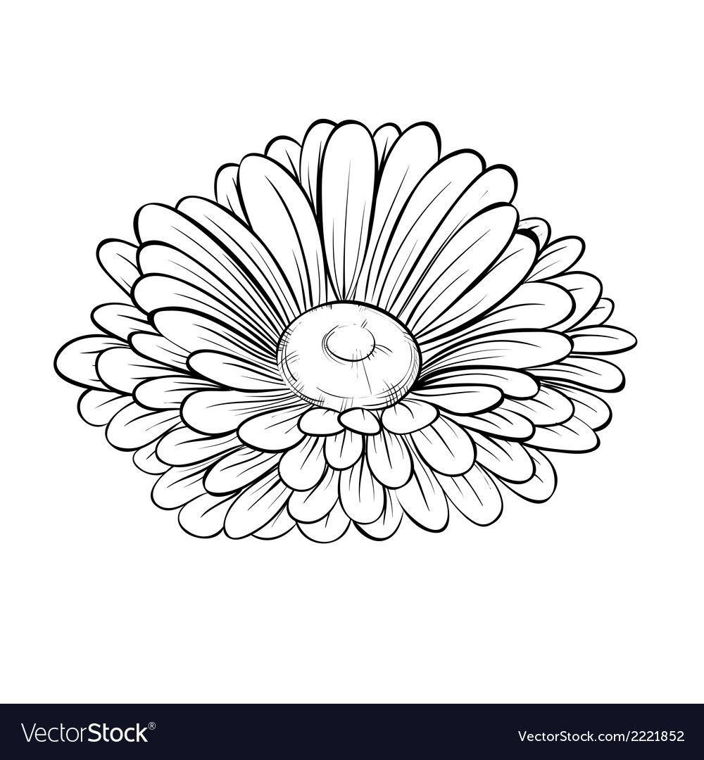 Daisy Tattoo Stencil: Pin By Diane Becker On Drawing
