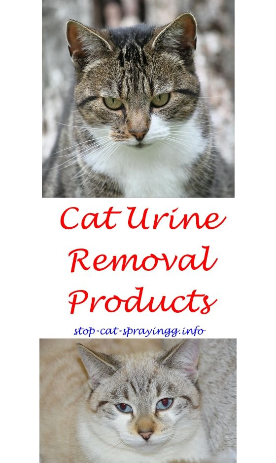 Spray To Keep Cats Off Christmas Trees | Pinterest