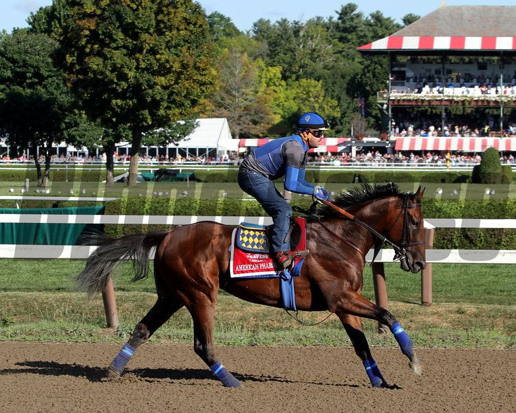 American Pharoah on the track at Saratoga on August 28, 2015. Photo By: Chad B. Harmon