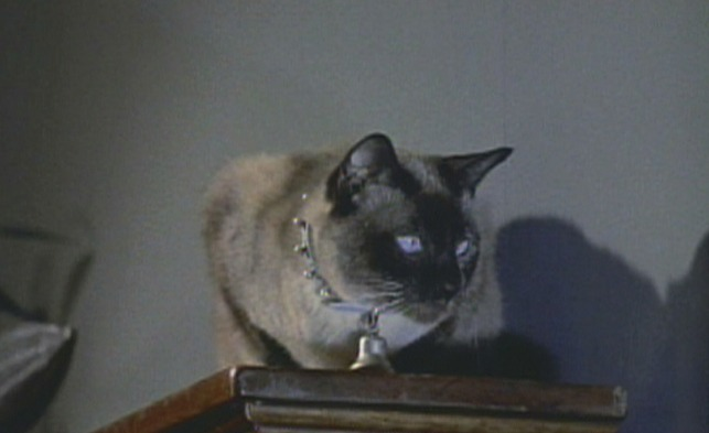 Bell, Book and Candle (1958 in 2020 Cats and kittens