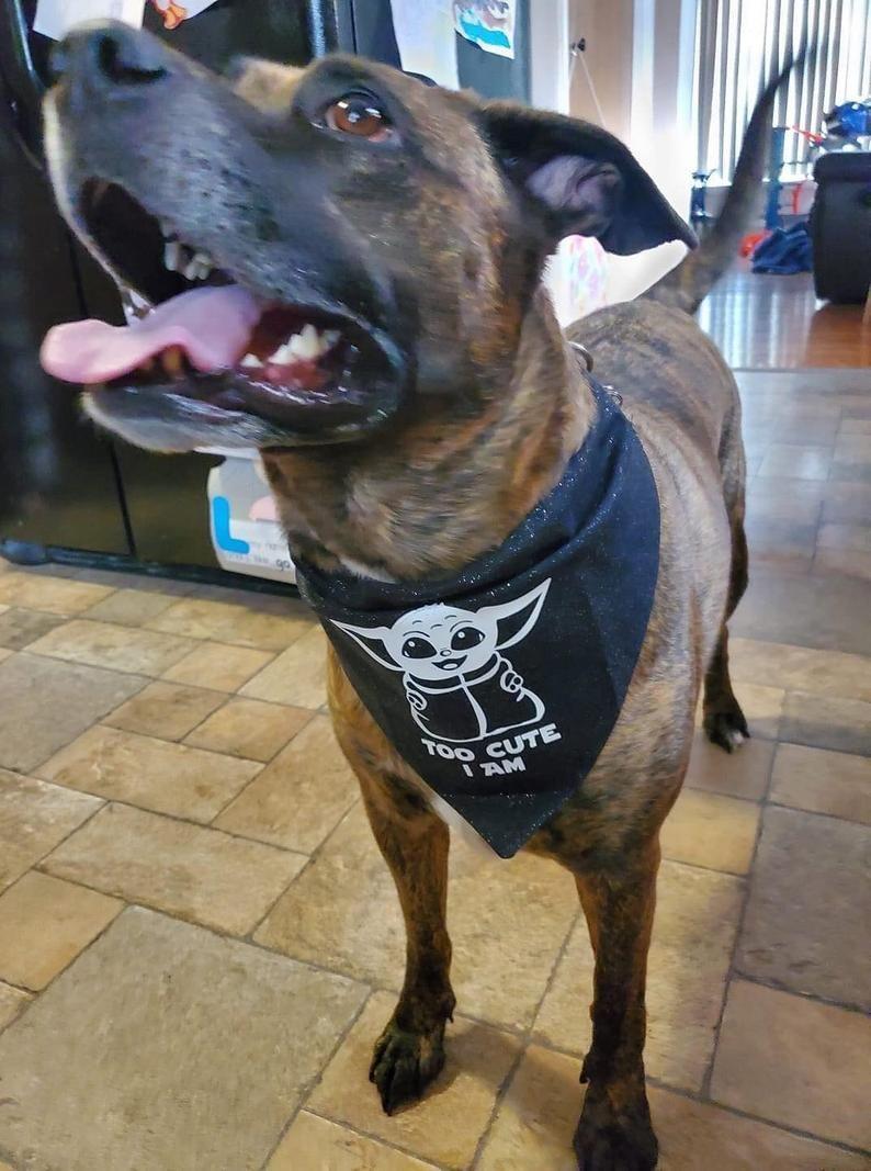 Yoda Dog Bows Collar Bows Dog Accessories Pet Bows Animal Collar Bows Medium and Large Dog Bow Tie Pet Birthday Pet Gift