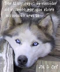 Resultado De Imagen Para Frases De Lobos De Amor Frases