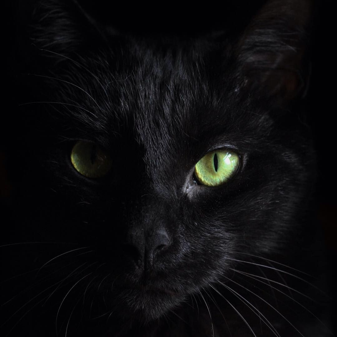 Cats are a mysterious kind of folk. ― Sir Walter Scott